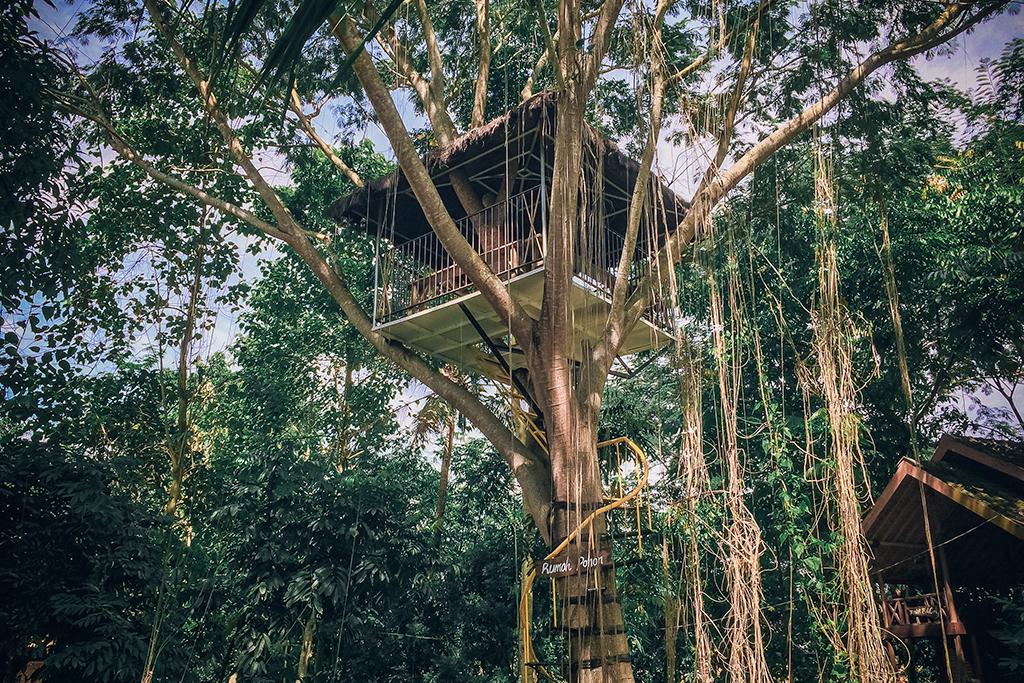 Beberapa Jenis Rumah Pohon Yang Ada di Belahan Dunia